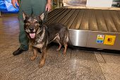 Customs Officer And His Dog Waiting For Drugs Check On Ljubljana Airport