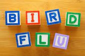 picture of avian flu  - H7N9 bird flu toy block - JPG