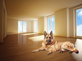german sheperd on wood floor 3d image