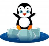 Cute  penguin on a ice floe