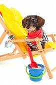 Wire haired dachshund in beach chair isolated over white background