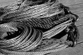 foto of buckaroo  - rope - JPG
