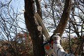 foto of electric trimmer  - Trimming tree with electric saw  - JPG