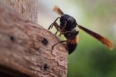 foto of wasp sting  - macro wasp insect in nature from Thailand - JPG