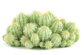 stock photo of peyote  - Plant bush isolated - JPG