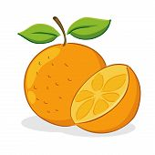 stock photo of orange peel  - Vector illustration of two orange fruit peeled and whole - JPG