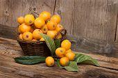 Fruits Of Loquat Tree