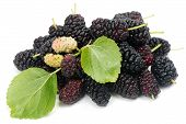 Fruits Of Black Mulberry (morus Nigra L.).