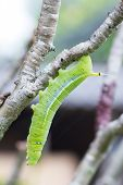 green worm On A Tree Branch