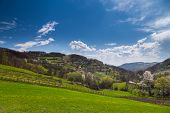 foto of serbia  - Serbia scenery in spring - JPG
