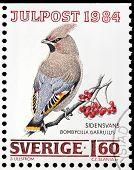 Bohemian Waxwing Stamp