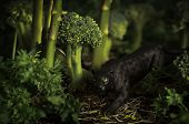 Toy panther in a vegetable forest