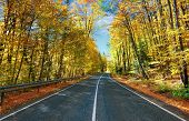 Road in golden autumn forest.