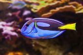 Fishes and corals reef in aquarium - nature background