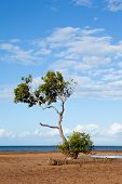 Mangrove Tree on Beach