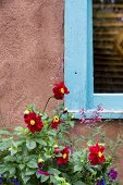 Red Flowers Adorning A New Mexico Window