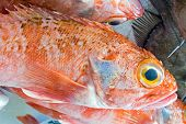 Red porgy fish for sale