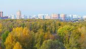View Of Autumn Forest And City