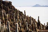Isla Incahuasi, Salar de Uyuni, Bolívia