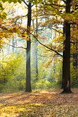 Sunbeam Lit Glade In Autumn Forest