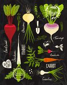Root Vegetables with Leafy Tops Set for Design on Blackboard
