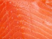 pic of fresh water fish  - Fresh salmon fish texture with water dew - JPG