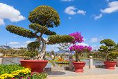 foto of bonsai  - Bonsai trees at City flower garden in Dalat - JPG