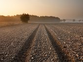 image of plowing  - plowed field with tractor traces and distant forest at sunrise - JPG