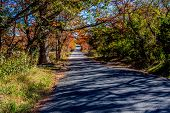 picture of guadalupe  - Beautiful Fall Foliage a Small Country Road on the Guadalupe River - JPG