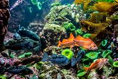 stock photo of grouper  - Several Interesting Colorful Grouper - JPG