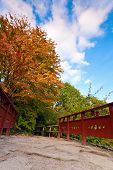 pic of royal botanic gardens  - Autumn tree and red wooden bridge with stone laid pathway at the Chinese garden - JPG