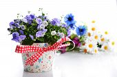 image of flower pot  - blue campanula flowers in flower pot and other flowers - JPG