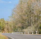 stock photo of tree lined street  - Asphalt curve road with deciduous tree in low - JPG