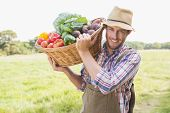 picture of farmer  - Farmer carrying basket of veg on a sunny day - JPG