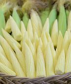 pic of corn-silk  - Baby sweet corn cobs in woven basket - JPG
