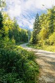 pic of dirt road  - dirt road in the woods on sunny summer day - JPG