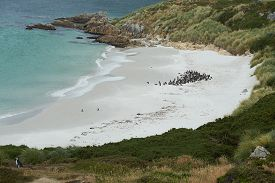 stock photo of falklands  - Curved sandy beach of Gypsy Cove in the Falkland Islands - JPG
