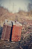 picture of old suitcase  - Two old vintage suitcases stand among a faded grass - JPG
