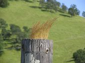 Blonde Fence Post