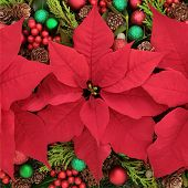 picture of poinsettias  - Poinsettia flower  display forming an abstract background - JPG