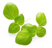 pic of basil leaves  - Basil leaves spice closeup isolated on white background - JPG