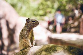 stock photo of lamar  - Close portrait of a cute  - JPG