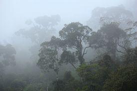 foto of rainforest  - Brazil  - JPG