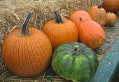 stock photo of hayride  - This is a photo of some pumpkins I took last fall - JPG