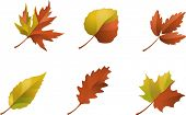 COLLECTION OF AUTUMN LEAFS ICONS