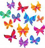 muchas mariposas de color