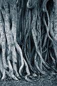 Dark background of tree roots. Shallow DOF.