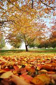 Beautiful autumn park with red and yellow leaves fallen from tree
