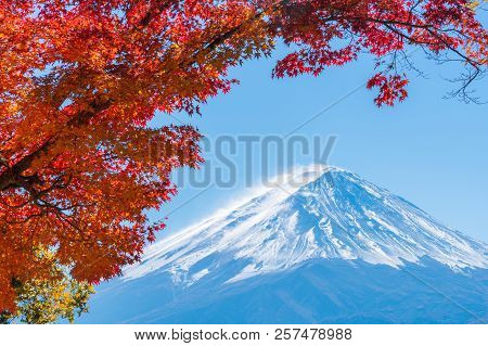 Mount Fuji In Autumn Color