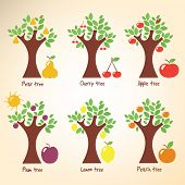 picture of cherry trees  - Different trees and fruits - JPG